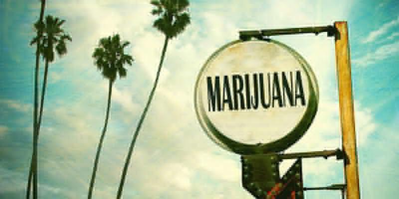 OG Kush Marihuana: ¿Nacida Y Criada En Florida?