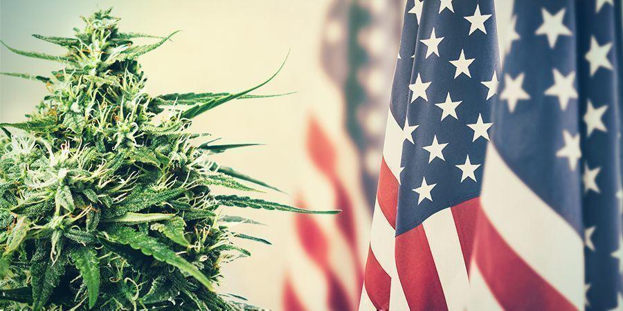 Cannabis: DE LA TRIBUTACIÓN A LA PROHIBICIÓN