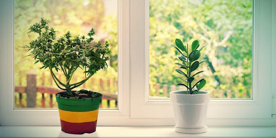 Cultivar En Alféizares De Ventanas