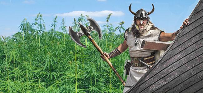 Vikingo Cannabis