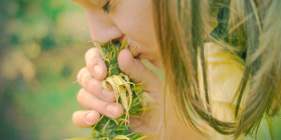 Cannabis - ¡huélelas!