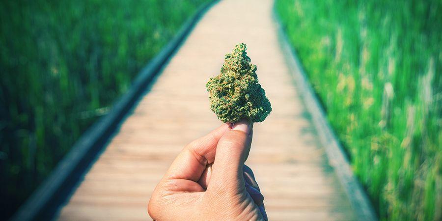 Marihuana Buena, Mala Y Espectacular