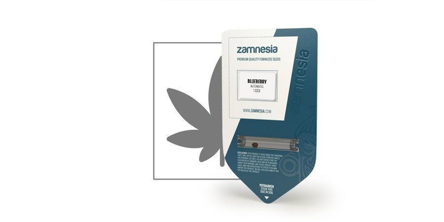 Blueberry Automatic (Zamnesia Seeds)