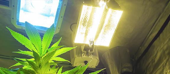 Las Luces De Cultivo Descarga Alta Intensidad Siglas En Ingles HID Son Dos Tipos HPS Y MH Sodio Presion Halogenuros Metalicos