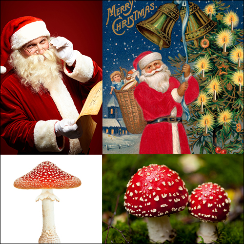 Santa Claus Amanita Muscaria