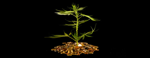 El cannabis bajo coste