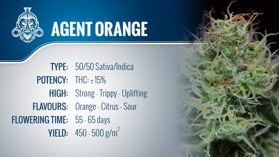 Agent Orange - TGA Subcool Seeds
