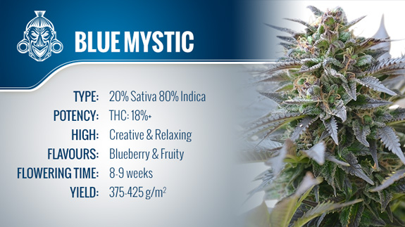 Blue Mystic (Royal Queen Seeds) Fem.