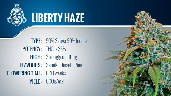 Liberty Haze - Barney's Farm