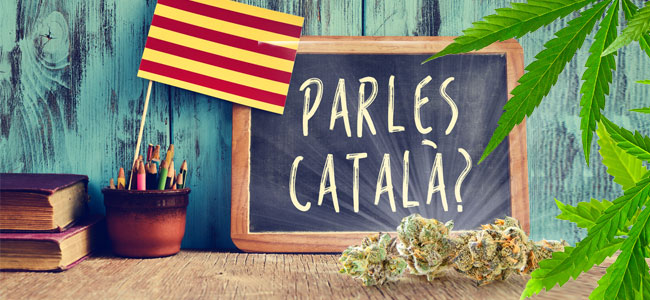 Cannabis Catalán
