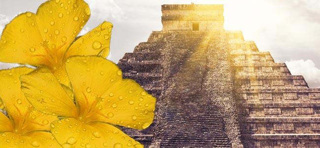 Aplicaciones De Los Mayas