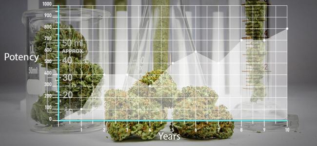 Marihuana De Hoy En Día Es Más Potente Que Antes