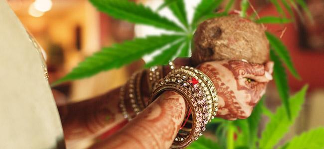 Bhang cultura india