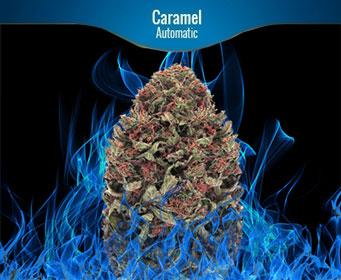 Caramel Automatic Zamnesia
