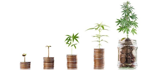 Crecimiento del mercado alemán del cannabis