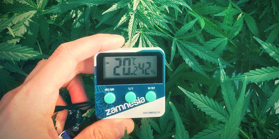 instalación marihuana
