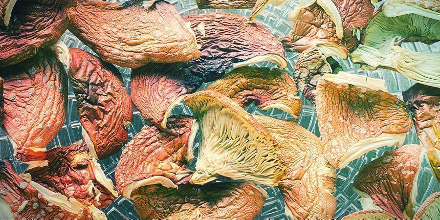 Amanita muscaria: Uso & Uso medicinal