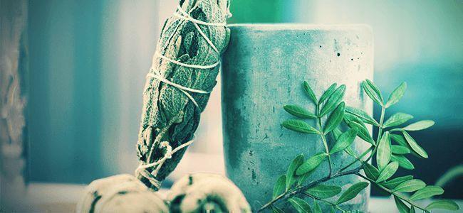 ¿Cómo Se Consume La Salvia Divinorum?
