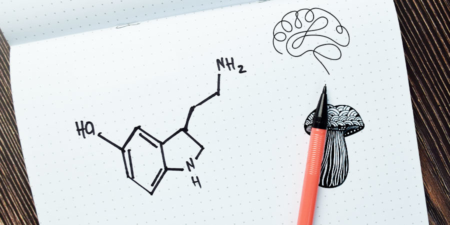 ¿Qué Efectos Producen Las Setas Alucinógenas?