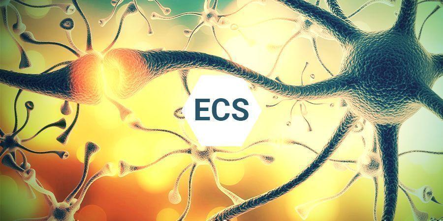 ¿Qué Es El Sistema Endocannabinoide?