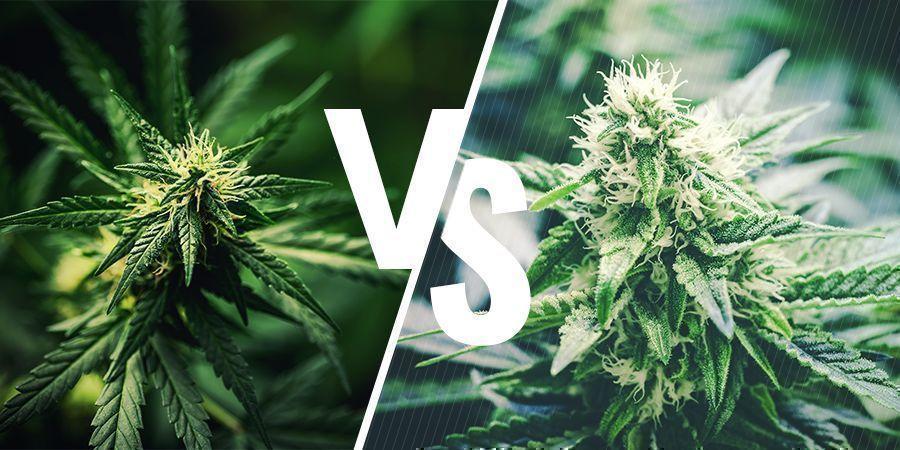 ¿Qué Diferencias Hay Entre El Cáñamo Y El Cannabis?