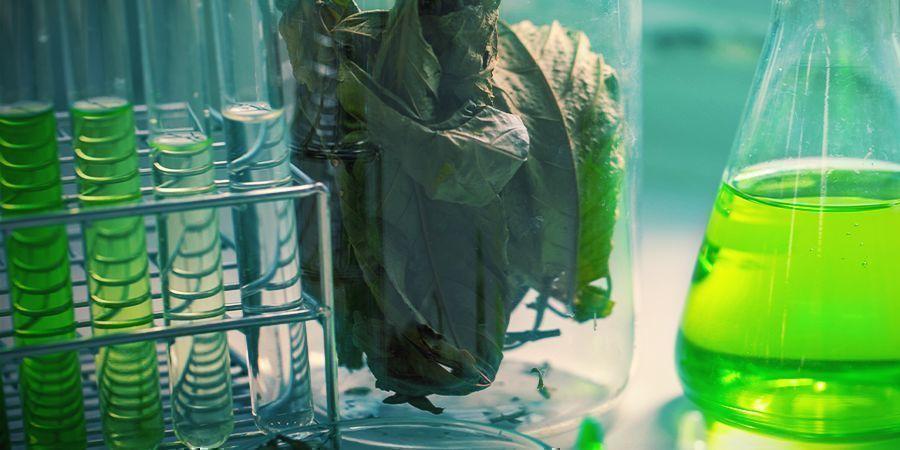 Química Del Kratom