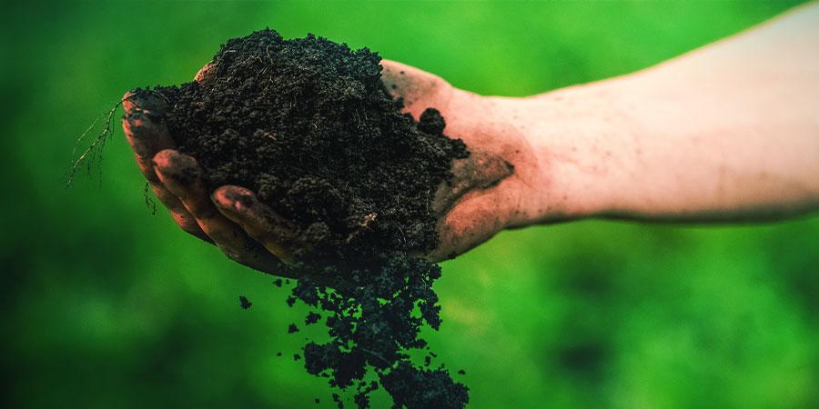 Los Mejores Suelos Para El Cultivo De Kratom