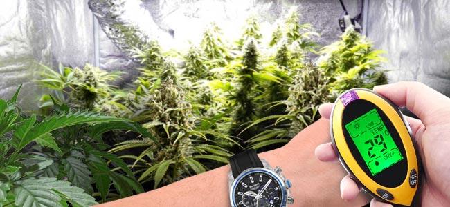 Efectos Positivos Del CO₂ En Plantas De Cannabis