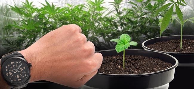 Cuándo Usar CO₂ En Tu Cultivo De Cannabis