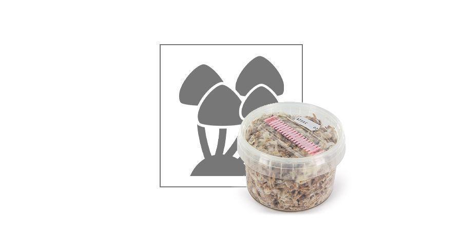 Kits de Cultivo Exterior Zamnesia