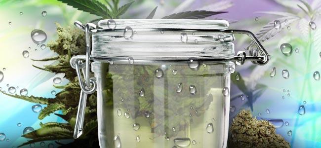 El Curado Al Agua del Cannabis