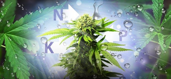 La Mejor Proporción NPK Para Cultivar Cannabis