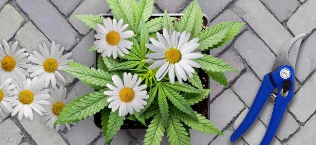 """Engañar A Los Demás Con Flores """"Falsas"""""""
