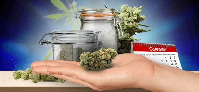 Almacenar Tu Marihuana