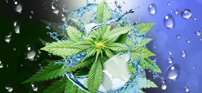 Hacer Un Lavado De Raíces A Tus Plantas De Cannabis