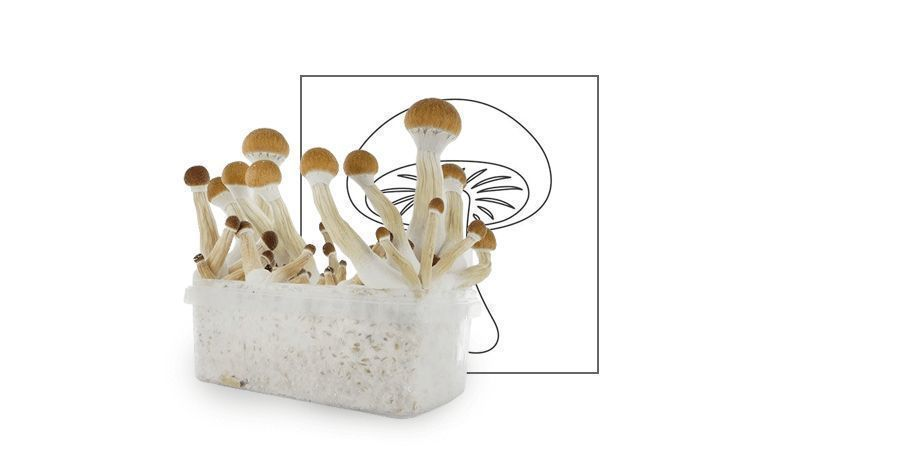 TIME%20TO%20ENJOY%20YOUR%20SHROOMS%20VP