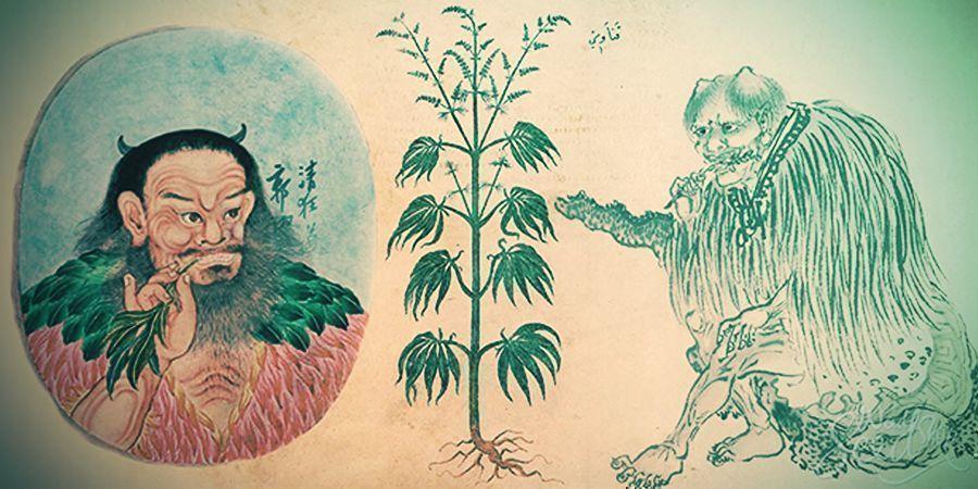 Primeros Usos Medicinales Del Cannabis En China