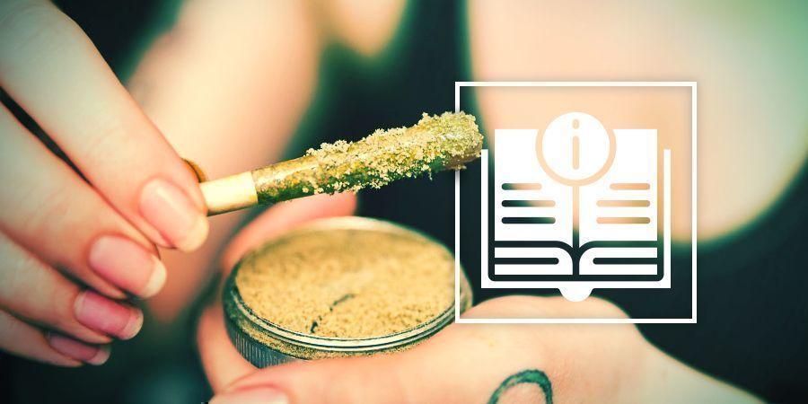 Guía Definitiva De Concentrados De Cannabis