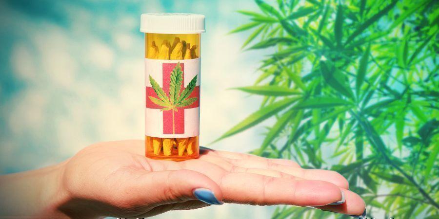 Colectivos Cannabis: Organizaciones Sin Ánimo De Lucro