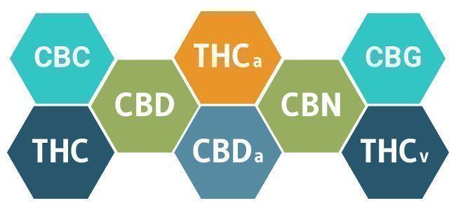cannabinoides cannabis