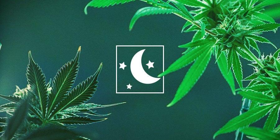Elige El Tipo De Cannabis Que Mejor Se Adapta A Tus Necesidades
