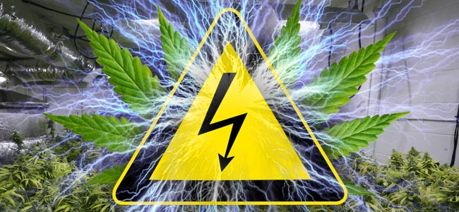 Electricidad Y Cultivo De Marihuana