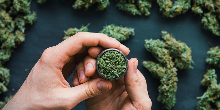 ¿Y La Marihuana? ¿Entra En La Categoría De Psicodélico?