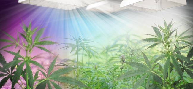 Espectro Lumínico Y Cannabis