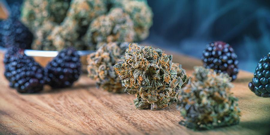 Buscador De Semillas De Marihuana: Sabores De La Marihuana