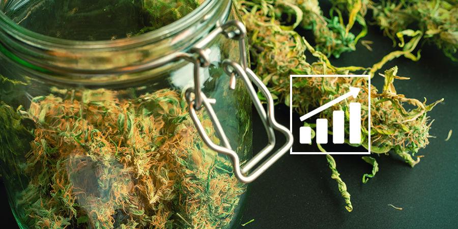 Buscador De Semillas De Marihuana: Puntualización Sobre Las Cosechas De Marihuana