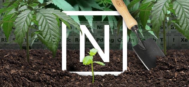 El Nitrógeno Y Las Plantas De Cannabis