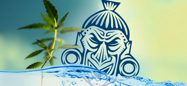 Agua Para Las Plantas En Su Etapa Vegetativa