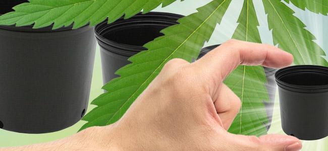 Elegir Tanaño Adecuado Recipiente Para Plantas