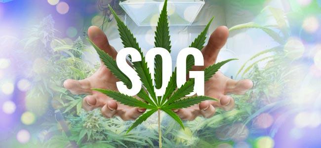 SOG (Sea Of Green)